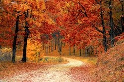 An Autumn Playlist